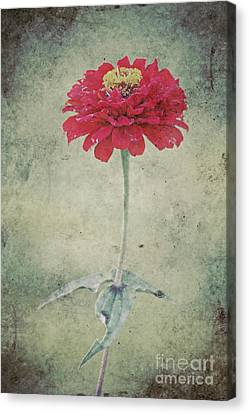 Remeber Me Canvas Print by Angela Doelling AD DESIGN Photo and PhotoArt