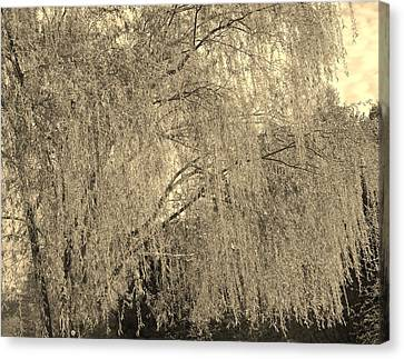 Remember Our Willow Canvas Print by Mary Zeman