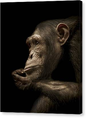 Chimpanzee Canvas Print - Reminisce by Paul Neville