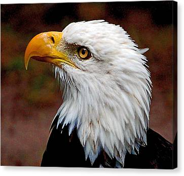 Reminiscent Bald Eagle Canvas Print by Donna Proctor