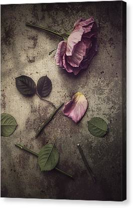 Remnants Canvas Print by Amy Weiss