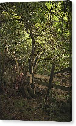 Grate Canvas Print - Remnants Of A Fence by Chris Dale