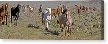 Canvas Print featuring the photograph Remuda by Judy Deist