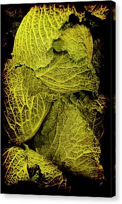 Renaissance Chinese Cabbage Canvas Print