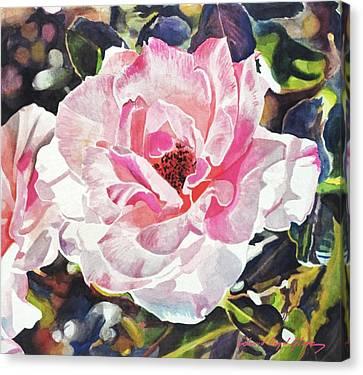 Canvas Print - Renaissance Rose Blossom by David Lloyd Glover