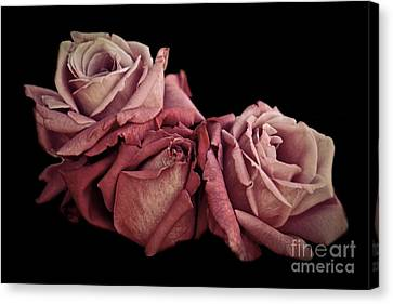 Renaissance Roses Canvas Print by Patricia Strand