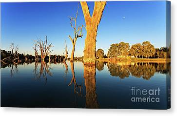 Canvas Print featuring the photograph Renamrk Murray River South Australia by Bill Robinson