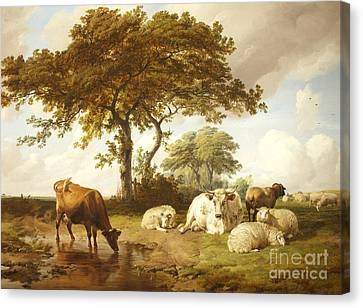 Repose In The Meadows, Canvas Print