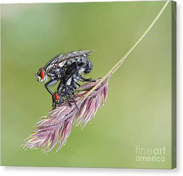 Reproduction - At The Height Of Bliss Canvas Print by Michal Boubin