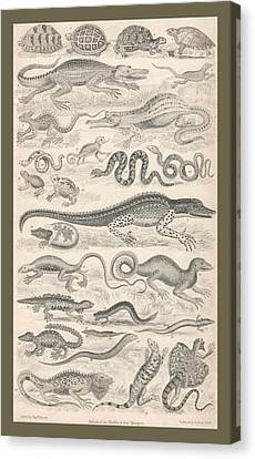 Reptiles Canvas Print by Rob Dreyer