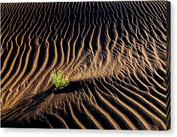 Resilient Plant Growing In Sand Canvas Print