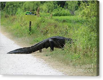 Respect Wildlife Large Gator Canvas Print by Carol Groenen