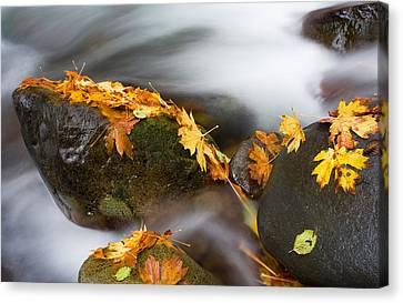 Maple Canvas Print - Respite by Mike  Dawson
