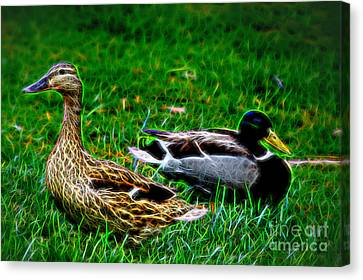 Canvas Print featuring the photograph Resting Ducks by Mariola Bitner
