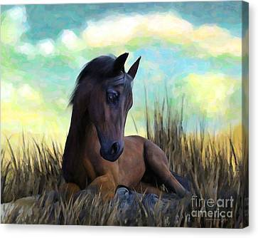 Canvas Print featuring the painting Resting Foal by Sandra Bauser Digital Art