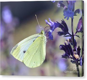 Canvas Print featuring the photograph Resting In The Purple by Kerri Farley