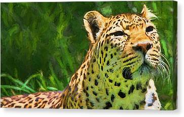 Resting Leopard Canvas Print by Dan Sproul