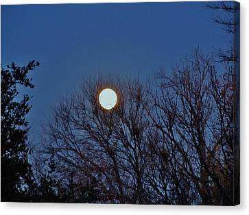 Resting Moon In The Trees Canvas Print by Donna Wilson