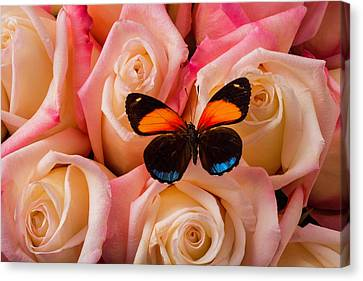 Resting On Pink Roses Canvas Print