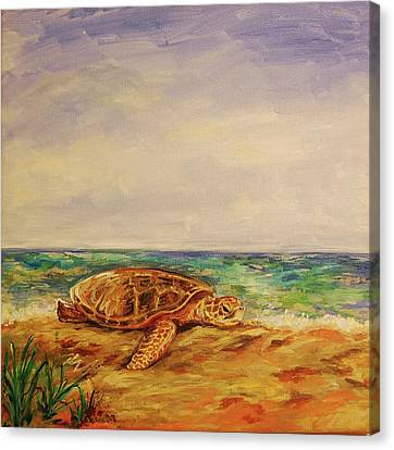 Resting Sea Turtle Canvas Print by Danielle Hacker