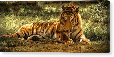 Canvas Print featuring the photograph Resting Tiger by Chris Boulton