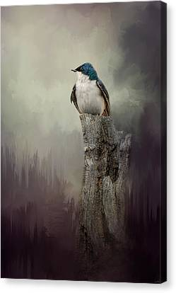 Resting Tree Swallow Canvas Print by Jai Johnson