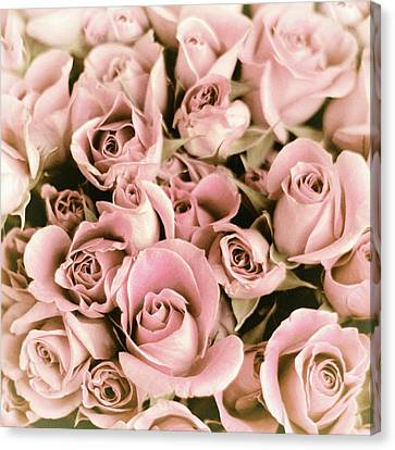 Reticent Rose Canvas Print by Jessica Jenney