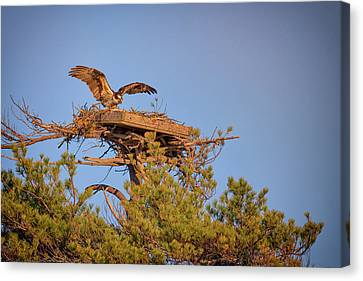 Returning To The Nest Canvas Print by Rick Berk
