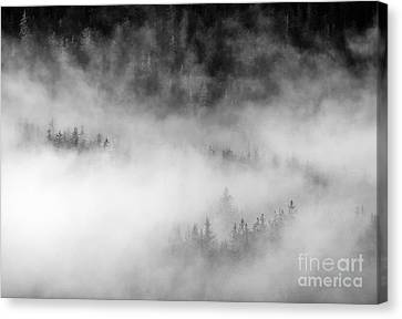 Revealed By The Light Canvas Print by Mike Dawson