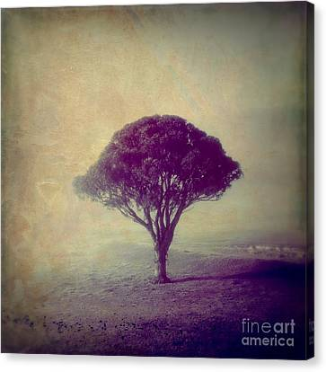 Revelation - 113vt Canvas Print by Variance Collections