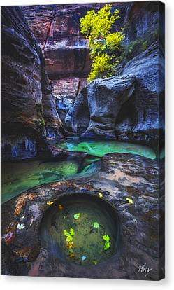 Canvas Print - Revived by Peter Coskun
