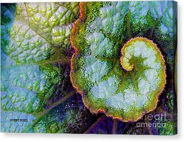 Blue Begonia Canvas Print - Rex Begonia Leaf by Corey Ford