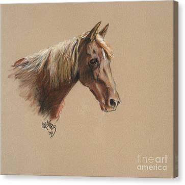 Reyena At The Morgan Horse Ranch Prns Canvas Print by Paul Miller