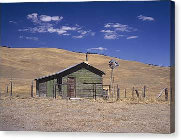 Cattle Run Canvas Print - Reyes Cabin - Salisbury Potrero by Soli Deo Gloria Wilderness And Wildlife Photography