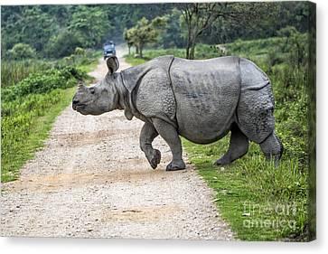 Rhino Crossing Canvas Print by Pravine Chester