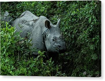 Rhino In Nepal Canvas Print