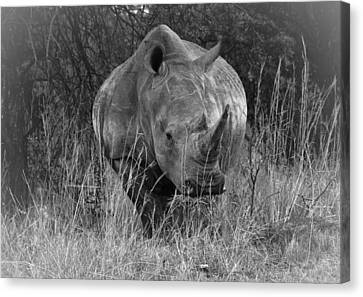 Rhino Canvas Print by Patrick Kain