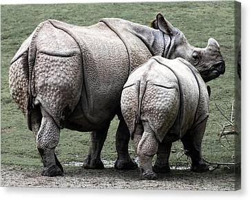 Rhinoceros Mother And Calf In Wild Canvas Print