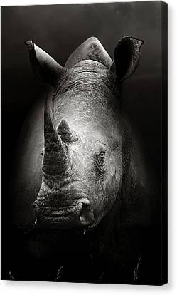 Rhinoceros Portrait Canvas Print by Johan Swanepoel