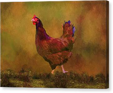 Rhode Island Red Hen Canvas Print by Sandi OReilly