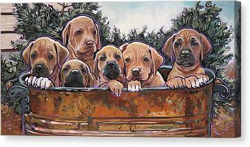 Ridgeback Canvas Print - Rhodesian Ridgeback Puppies by Nadi Spencer