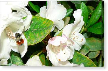 Canvas Print featuring the photograph Rhododendron And Bee by Larry Keahey