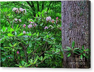Rhododendron And Poplar Trunk Canvas Print