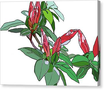 Rhododendron Buds Canvas Print by Jamie Downs