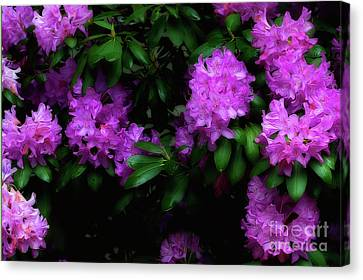 Rhododendron Flower Paintography Canvas Print by Dan Friend