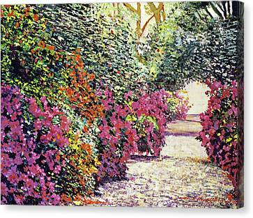 Rhododendron Pathway Exeter Gardnes Canvas Print by David Lloyd Glover