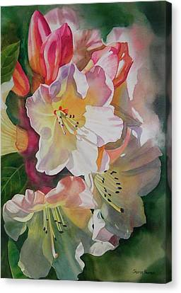 Rhododendron Shadows Canvas Print by Sharon Freeman