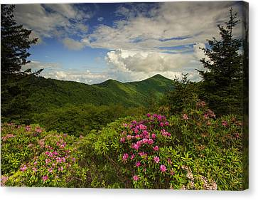Rhododendrons On The Blue Ridge Parkway Canvas Print