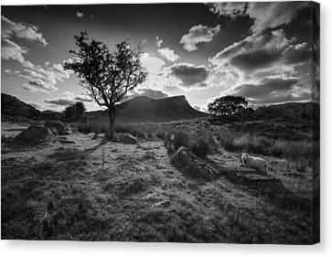 Canvas Print featuring the photograph Rhyd Ddu, Snowdonia, Wales by Richard Wiggins
