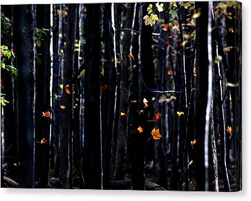 Rhythm Of Leaves Falling Canvas Print by Bruce Patrick Smith